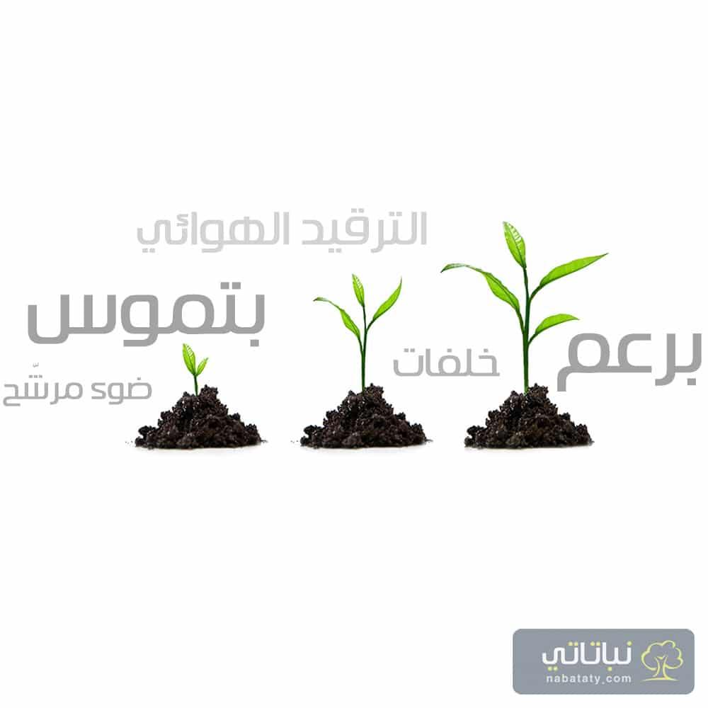 مصطلحات نباتية