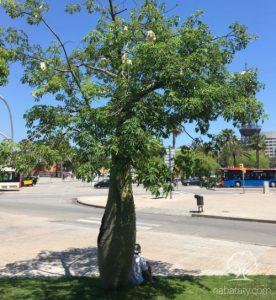 شجرة خيط الحرير
