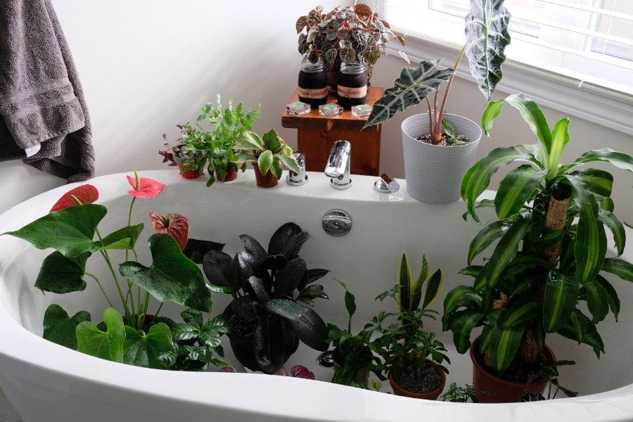 ري النباتات أثناء السفر