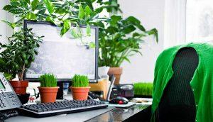 فوائد النباتات في مكان العمل