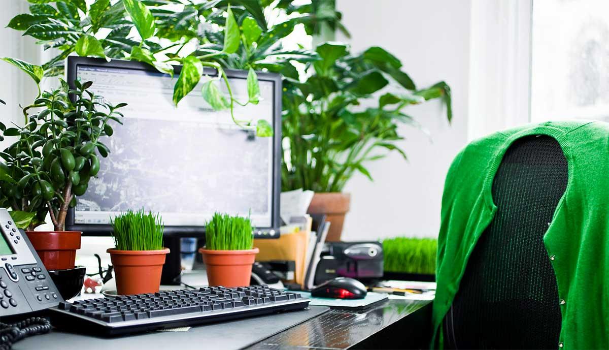 النباتات في مكان العمل