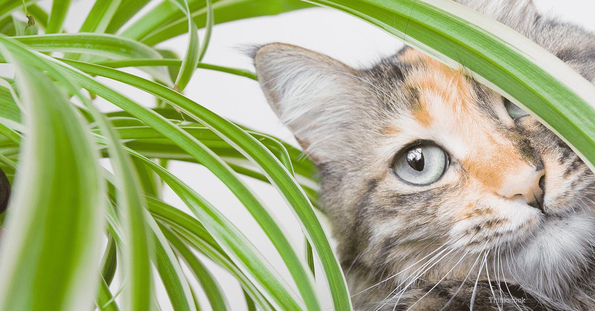نباتات مناسبة للقطط والكلاب والحيوانات الأليفة
