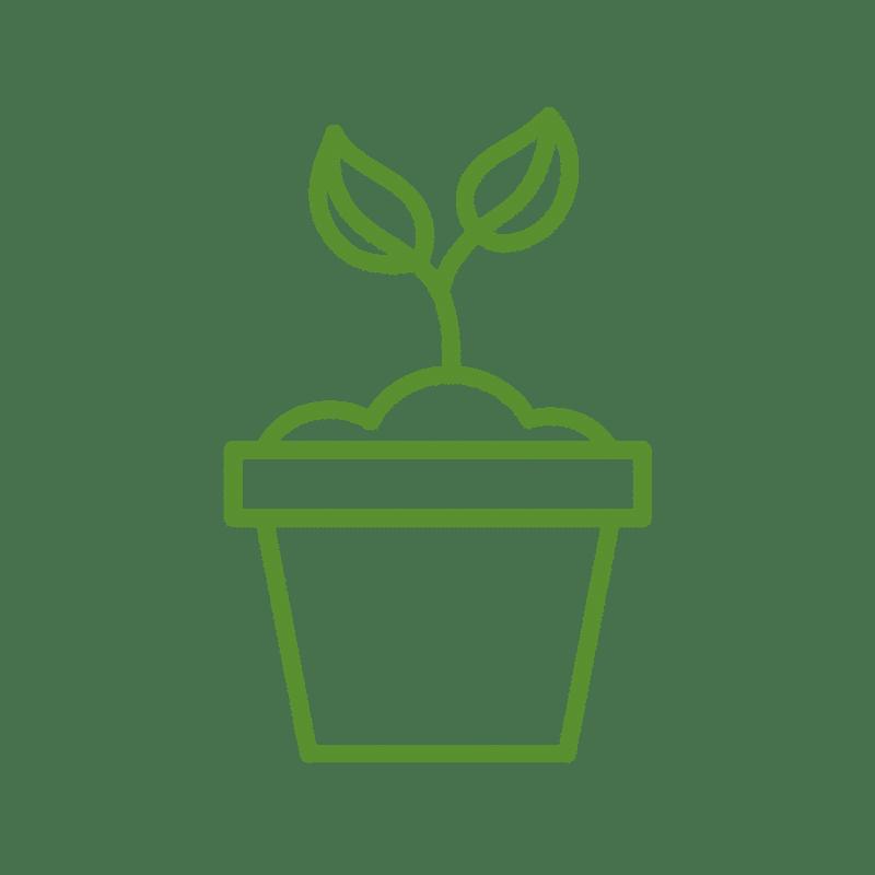 النباتات الداخلية