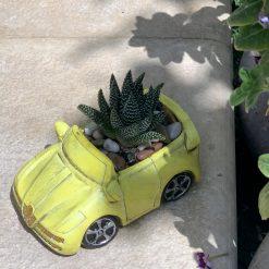حوراء القصر في اصيص على شكل سيارة صفراء